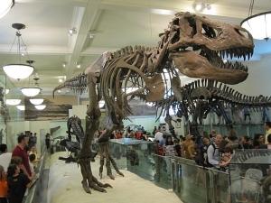 T-Rex AMNH